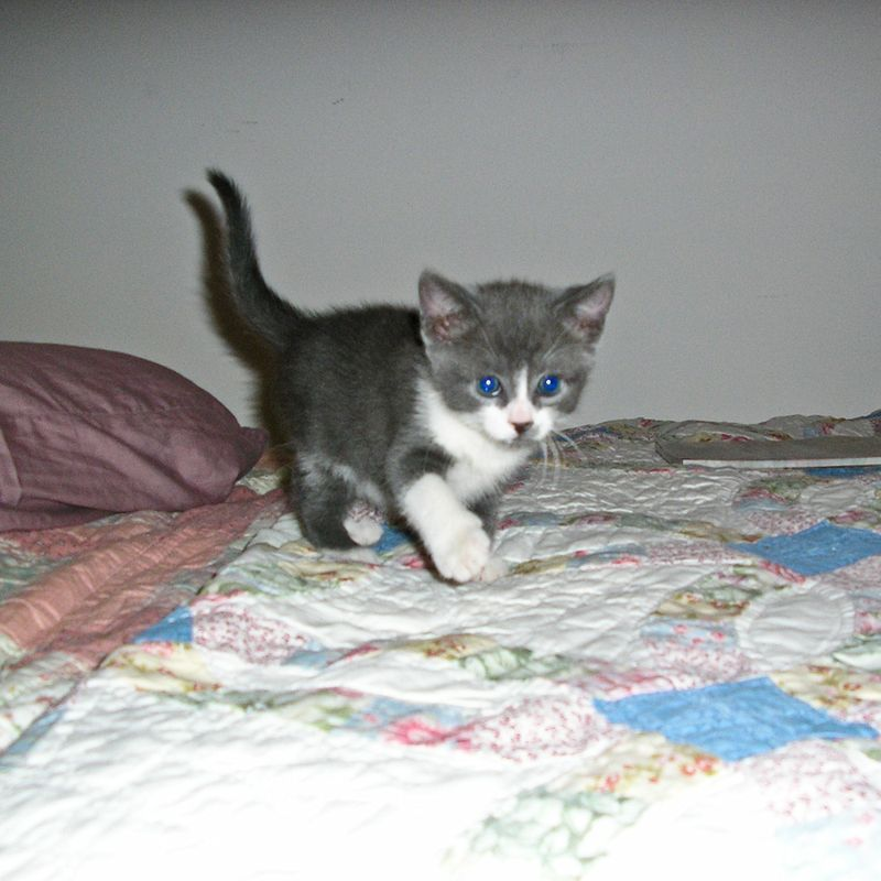 Fenway as a baby