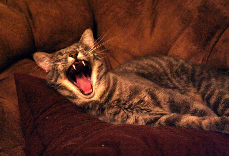 Boo yawning