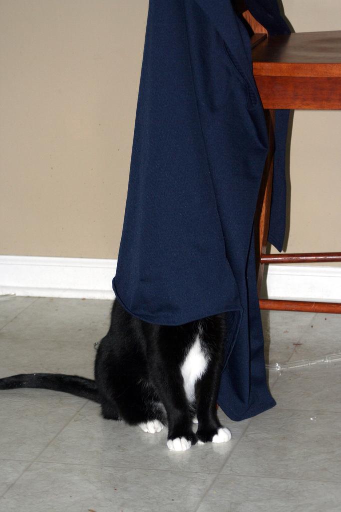 Buster hide n seek